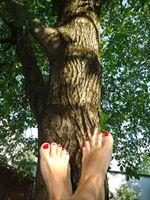 Der Nussbaum und ich