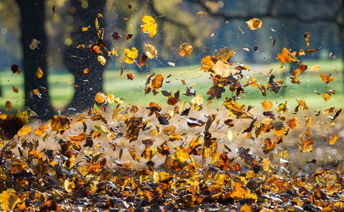 Tanzendes Herbstlaub