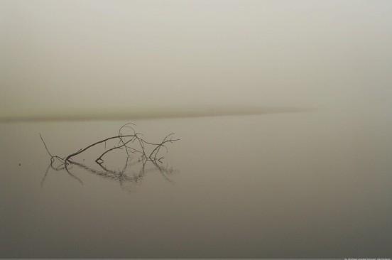 Weiher im Nebel